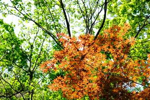 季節の移り変わりの写真素材 [FYI01177826]