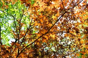 季節の移り変わりの写真素材 [FYI01177827]
