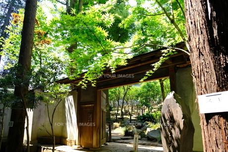 日本庭園の写真素材 [FYI01177829]