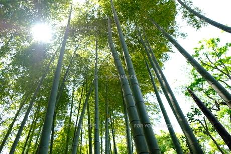 竹林の写真素材 [FYI01177830]