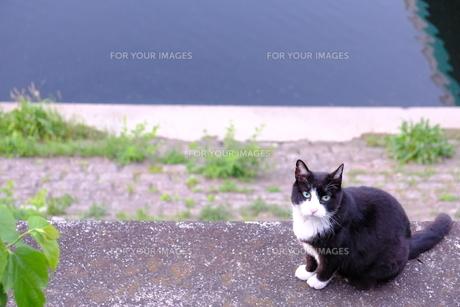 猫と河原とほのぼの日常風景の写真素材 [FYI01177831]