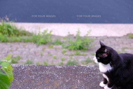 ほのぼの猫の日常の写真素材 [FYI01177832]