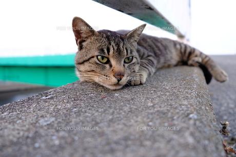 考え事しているかのような猫の写真素材 [FYI01177835]