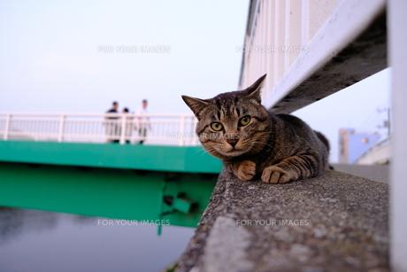 こちらを気にする猫の写真素材 [FYI01177836]