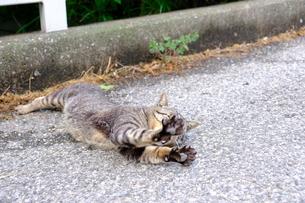 伸びをする猫の写真素材 [FYI01177841]