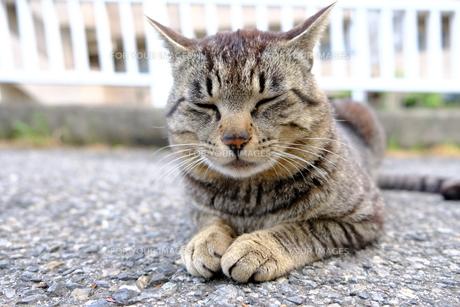 可愛い猫の写真素材 [FYI01177843]