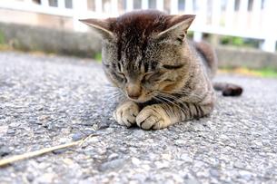 あやまり猫の写真素材 [FYI01177844]