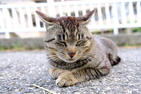 可愛い猫の写真素材 [FYI01177845]