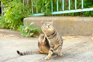 大好きな猫の写真素材 [FYI01177853]