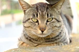 大好きな猫の写真素材 [FYI01177856]