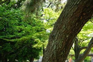 緑の美しい植物たちの写真素材 [FYI01177889]