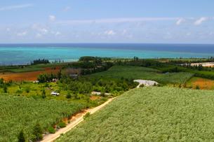 伊良部島の畑と海の写真素材 [FYI01177973]