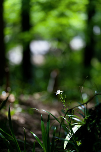 背景 新緑 森 林 緑の写真素材 [FYI01178028]