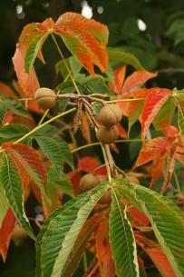 木の実の写真素材 [FYI01178070]