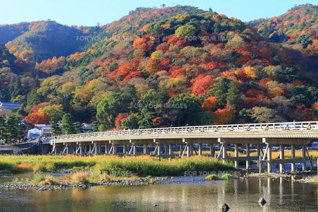 嵐山 渡月橋 紅葉の写真素材 [FYI01178455]