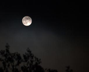 月の写真素材 [FYI01178549]