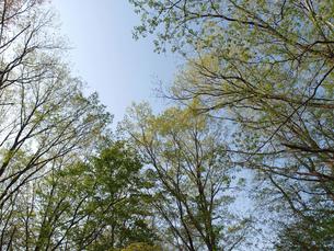 森の写真素材 [FYI01178552]