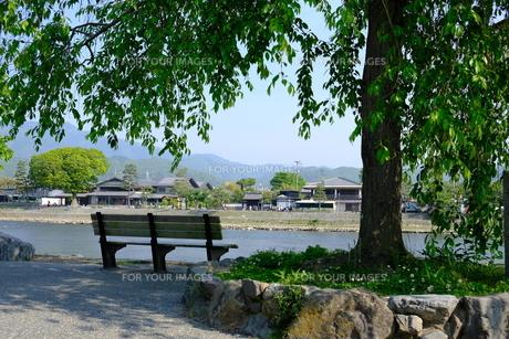 川辺のベンチの写真素材 [FYI01178574]