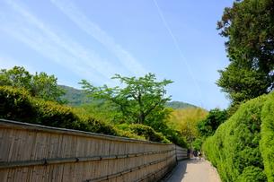 日本の和と自然の写真素材 [FYI01178577]