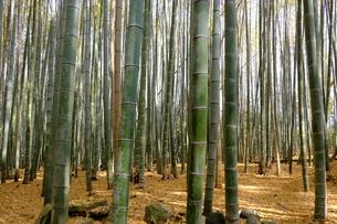 竹林が広がる風景の写真素材 [FYI01178578]