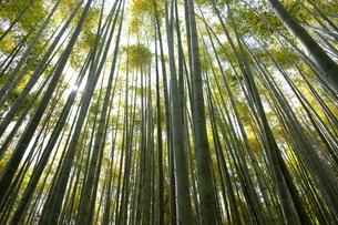 竹林が広がる風景の写真素材 [FYI01178579]