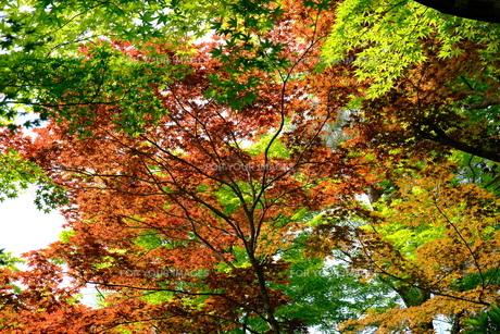 日本の自然の風景の写真素材 [FYI01178584]