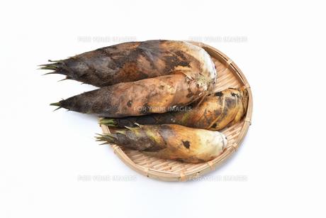 収穫した筍の写真素材 [FYI01178713]