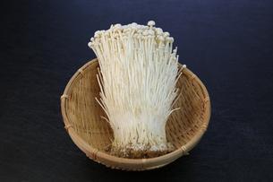 エノキダケの写真素材 [FYI01178926]