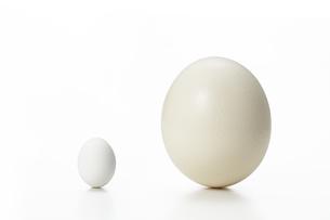 鶏とダチョウの卵の写真素材 [FYI01179092]