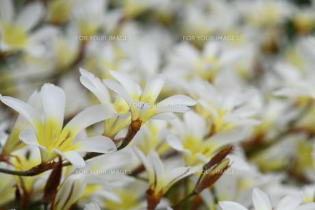 初夏の花3の写真素材 [FYI01179144]