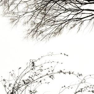 木 二本の写真素材 [FYI01179238]
