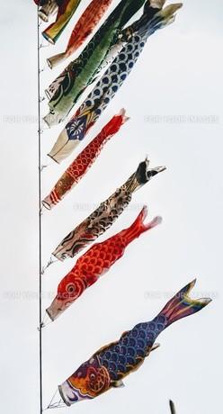 鯉のぼりの写真素材 [FYI01179277]