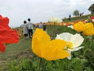花の写真素材 [FYI01179399]