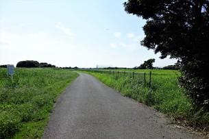 夏の田舎道の写真素材 [FYI01179624]