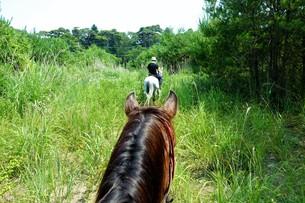 乗馬の写真素材 [FYI01179636]