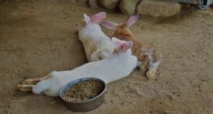 食後のウサギの写真素材 [FYI01179637]