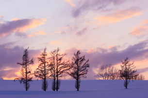美瑛 雪夕景の写真素材 [FYI01179891]