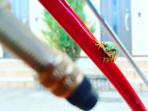 黄緑のカエルと真っ赤な自転車|動物・爬虫類・補色・自然・日常の写真素材 [FYI01180357]