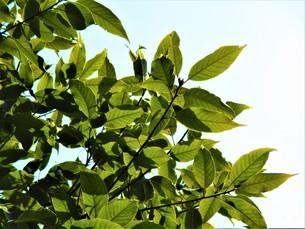 2月の緑の写真素材 [FYI01180381]