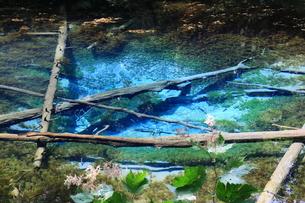 神の子池 北海道の写真素材 [FYI01180437]