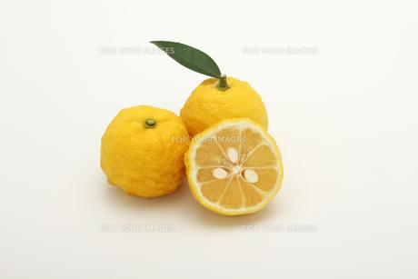 ゆず ゆず果実の写真素材 [FYI01180635]