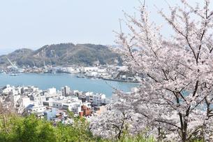 桜と尾道水道の写真素材 [FYI01180770]