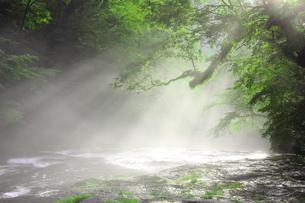 菊池渓谷の光芒の写真素材 [FYI01180822]