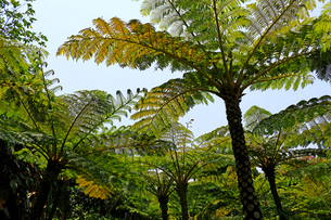 熱帯のジャングルの写真素材 [FYI01180979]