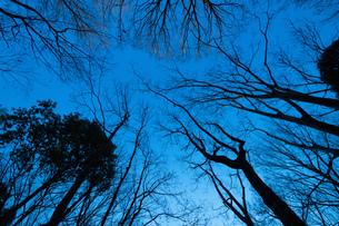 冬の立木群の写真素材 [FYI01181091]