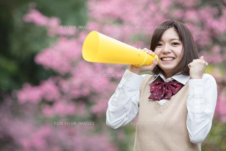 メガホンを持った女子学生の写真素材 [FYI01181427]