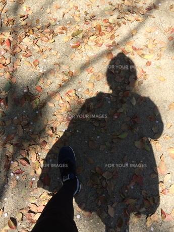 秋に落ち葉の上を散歩する姿を写す影の写真素材 [FYI01181449]