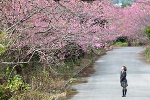 桜並木と女学生の写真素材 [FYI01181569]