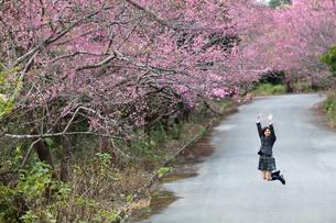 桜並木とはしゃぐ女学生の写真素材 [FYI01181576]