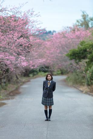 桜と女学生の写真素材 [FYI01181577]